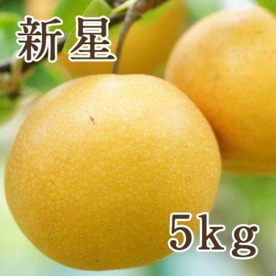 新星 5kg(8〜10玉)