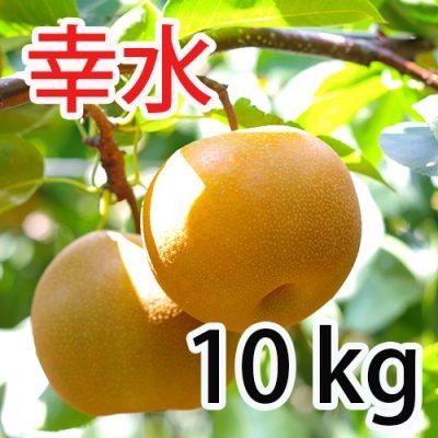 幸水 10kg(20~28玉)