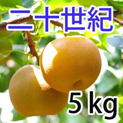 二十世紀  5kg (10~14玉)