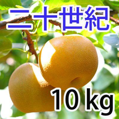 二十世紀  10kg (20~28玉)
