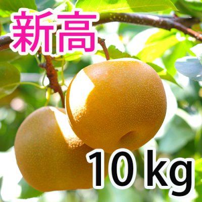 新高  10kg (10~18玉)