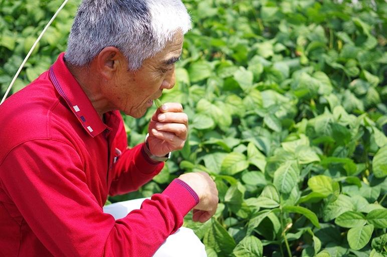 農業一筋50年!大ベテラン農家が作る美味しい枝豆