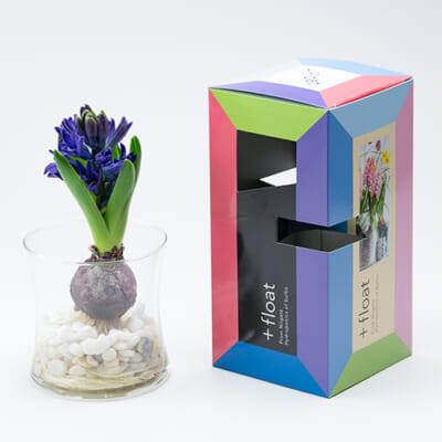 予約注文:水耕栽培用 花芽付き球根「+float」