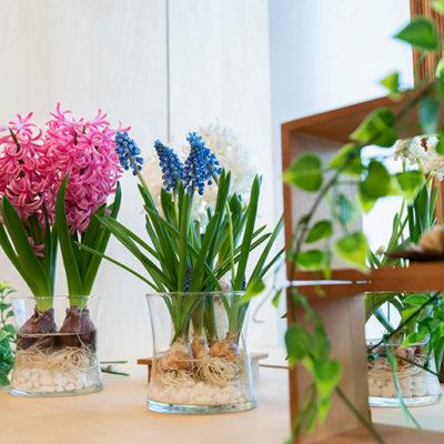 カラフルな花が部屋を彩ります