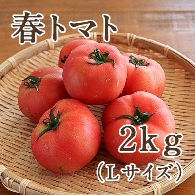 春トマト Lサイズ約2kg(9~10玉)
