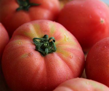 予約注文:新潟産 にごりかわトマト