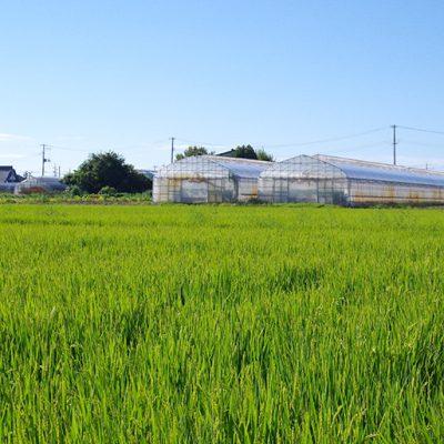 新潟平野の中でも有数の米どころ