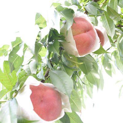 香りがとても良い桃