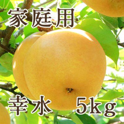 【家庭用】幸水 5kg(10〜18玉)