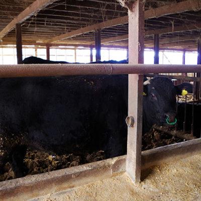 自家製の完熟堆肥をたっぷり使って健康に育てる