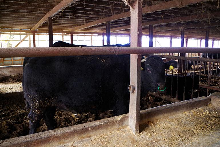 3.自家製の完熟堆肥