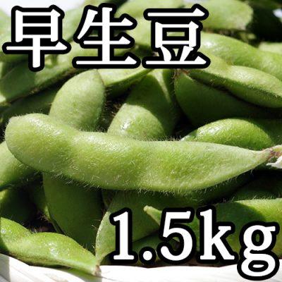 早生豆 1.5kg