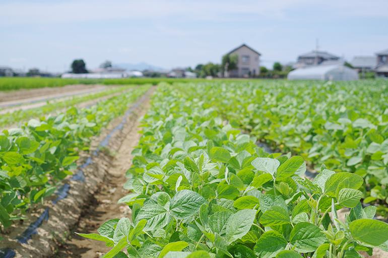 枝豆通も唸る味。黒埼茶豆の歴史