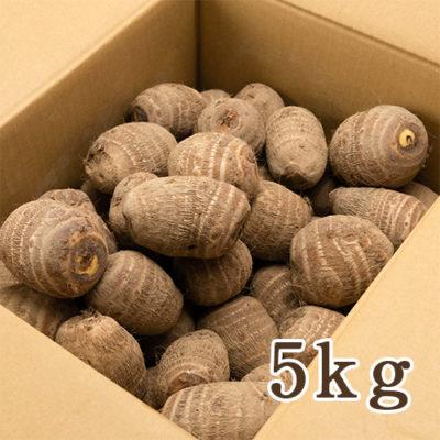 糸魚川産 里芋 5kg