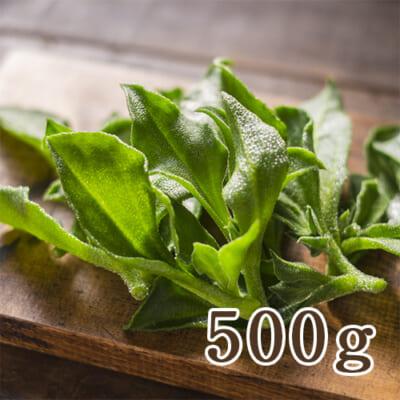 新潟県産アイスプラント 500g