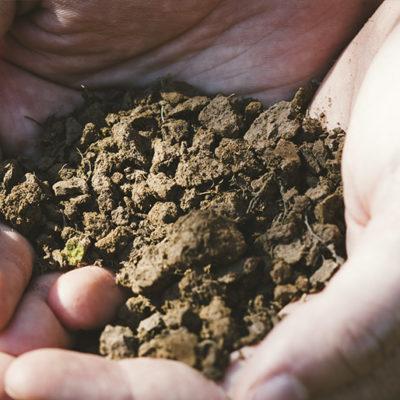 水はけと水持ちのバランスが良い生育に適した土壌