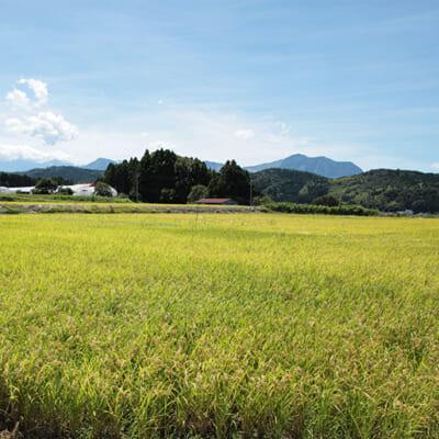 山間地特有の気候が甘いお米を実らせる