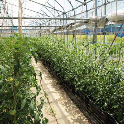 ハウスの中で安定して高品質に栽培