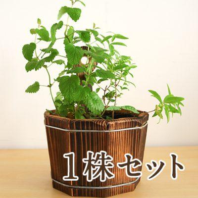 ハーブ苗付木製プランター 1株セット