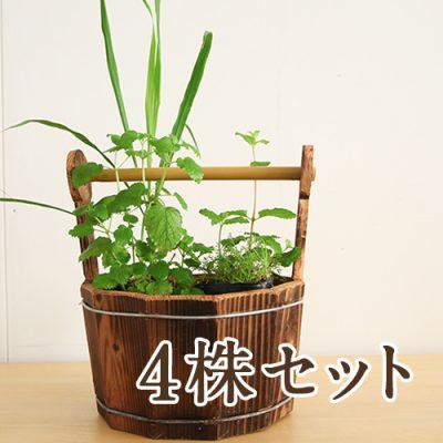 ハーブ苗付木製プランター 4株セット