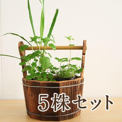 ハーブ苗付木製プランター 5株セット