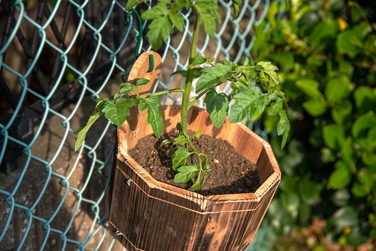 植物が健康的に育つ天然素材100%のプランター