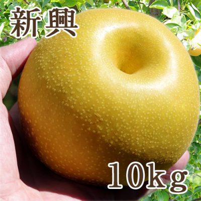 新興 10kg
