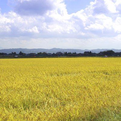 越後平野の肥沃な土壌