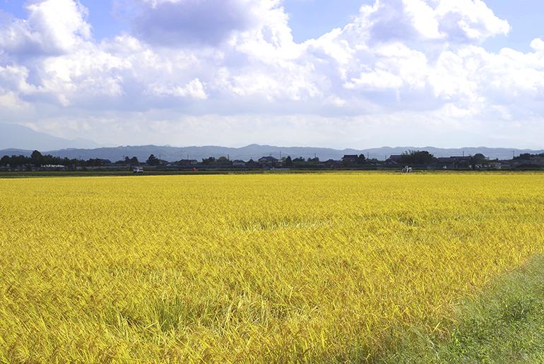 越後平野の肥沃な土壌と信濃川の豊富な水源