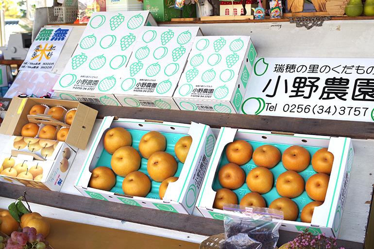 果樹栽培がとても盛んな新潟県三条市
