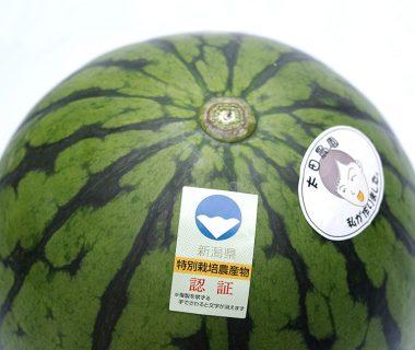 新潟産 小玉スイカ(特別栽培認証)