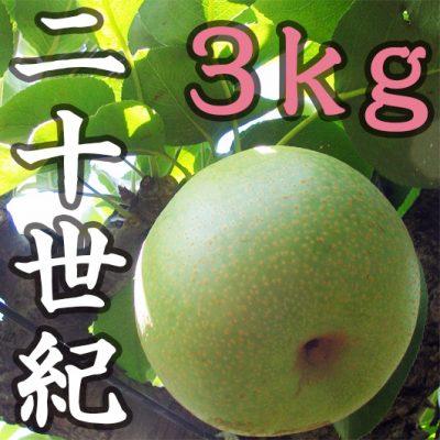 二十世紀 3kg(8~11玉)