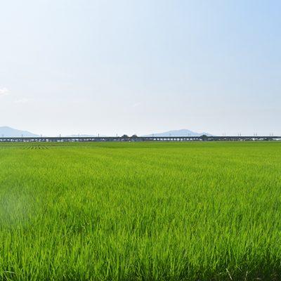 300年の歴史を持つ農園