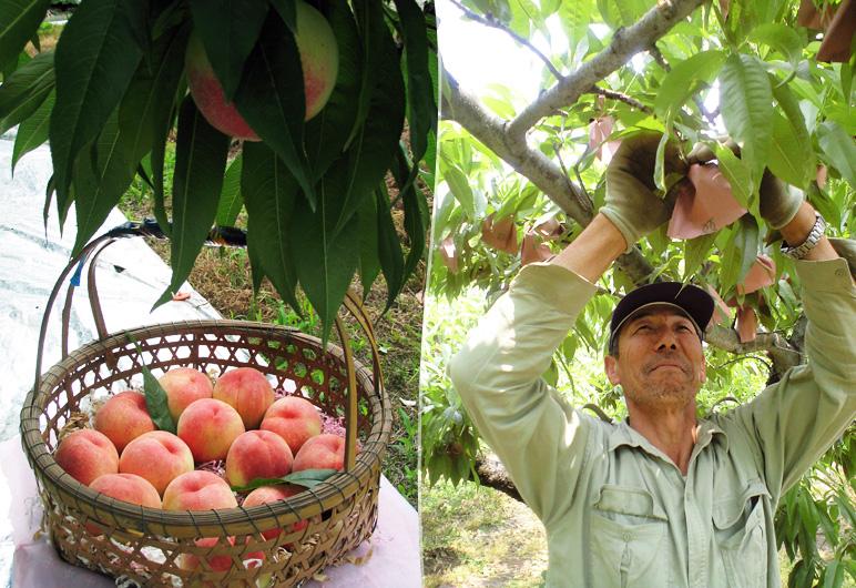 種類豊富な桃を楽しめる、頒布会注文あり!