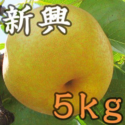 新興 5kg(9~16玉)