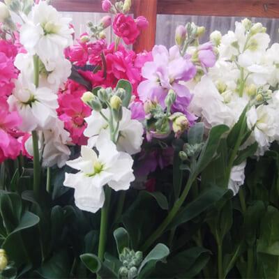 簡単なお手入れで長持ちする綺麗な花です