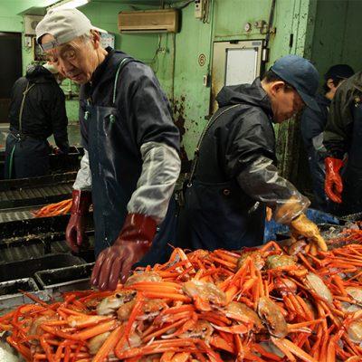 村上市の寝屋(ねや)漁港から産地直送でお届けします!