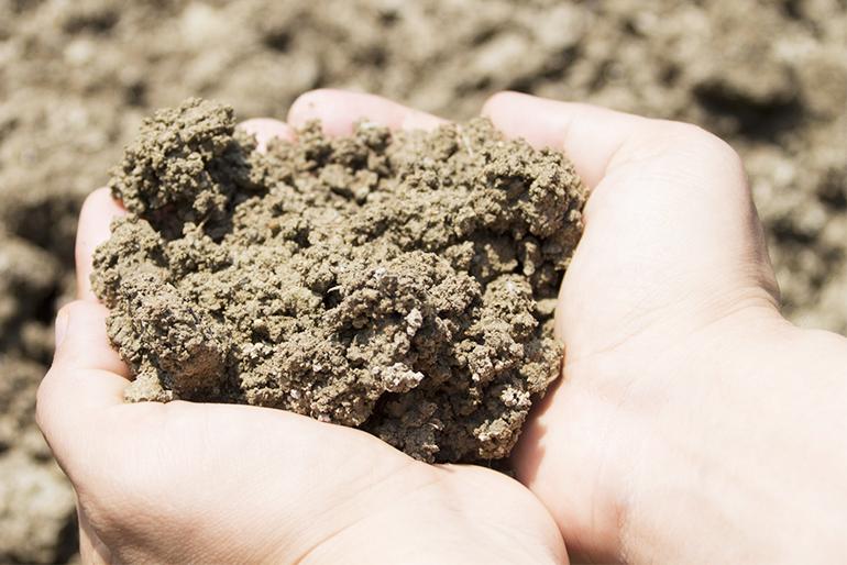 果樹を元気に育てる自作の肥料