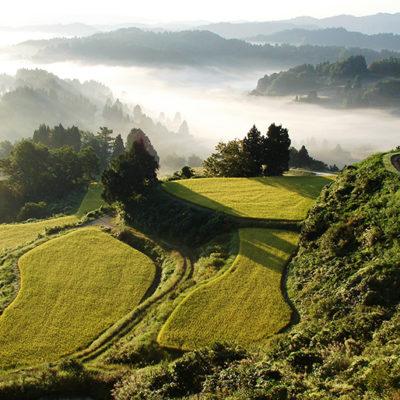 山の奥深い場所にて育った 秘蔵の棚田米