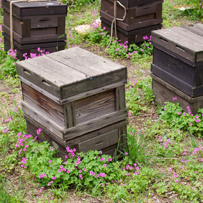 元気よく飛び回るミツバチたち
