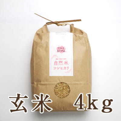 岩船産 自然栽培米コシヒカリ 玄米4kg