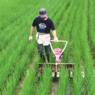 農薬も通常の半分ほどに抑えた栽培