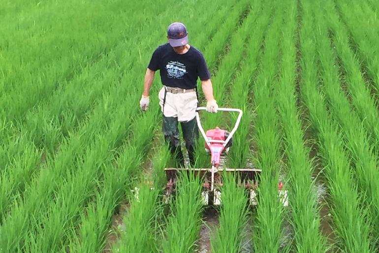 有機肥料でより美味しいお米に育てる