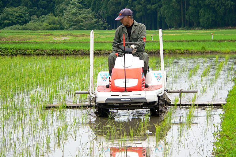 土と稲の本来の力を最大限引き出す「自然栽培」
