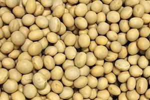 1.厳選した大豆をたっぷり使用