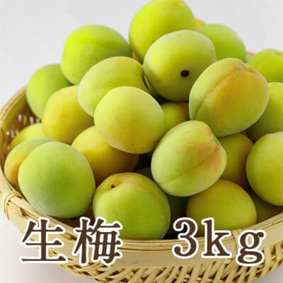 新潟県産 生梅 3kg