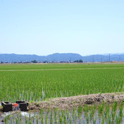 栄養たっぷりの土壌が広がる田んぼ