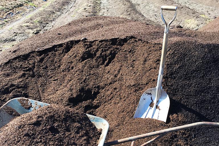 堆肥で旨みを出した自家栽培の水なす