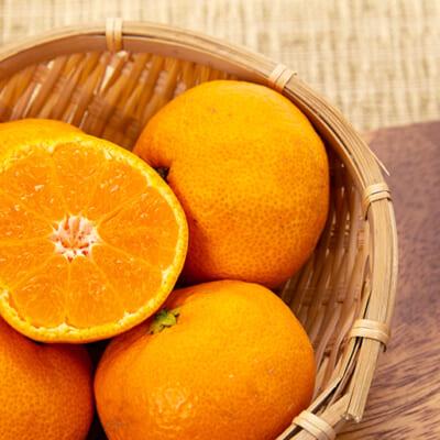 自然の甘味を凝縮する「無添加製法」