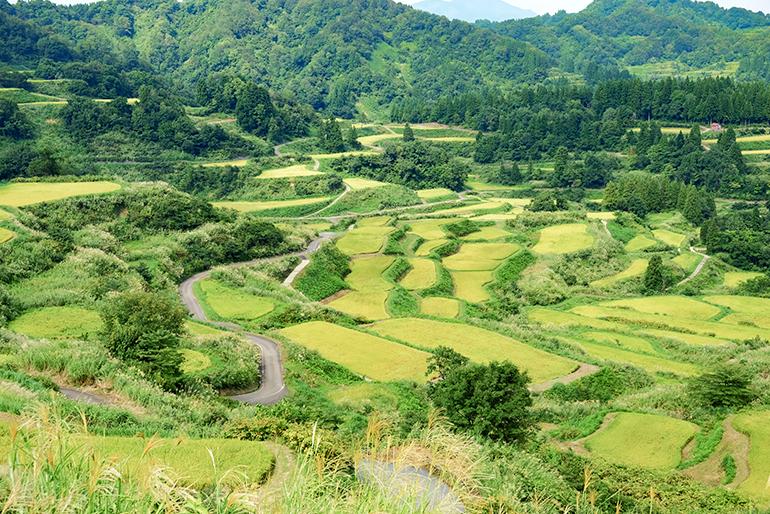 稲をたくましく生長させる山の恵み